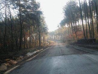 las, pokrzywnica