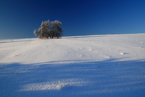śnieg pole